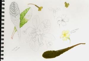 Lizzie Harper's sketchbook illustration